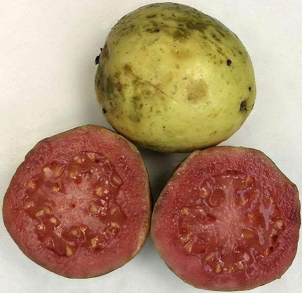 La goyave est un fruit qui stimule le transit intestinal. © Fibonacci/Licence Creative Commons