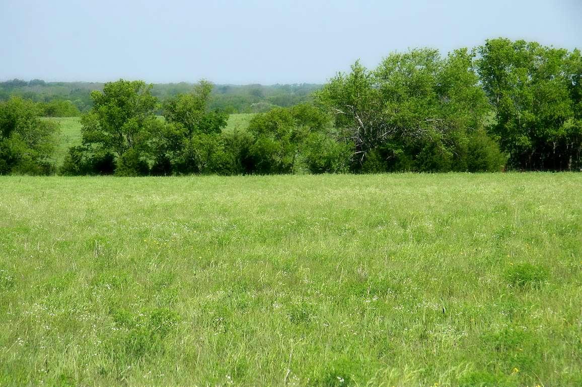 Les échantillons de sols ont été prélevés dans la Blackland Prairie au Texas. Les trois types de sols recouvrent près de 38 % de la surface des États-Unis. Il est donc crucial de comprendre le rôle qu'ils jouent sur la croissance des végétaux face à un enrichissement en gaz carbonique de notre atmosphère. © Mathornature photography, Flickr, CC by 2.0