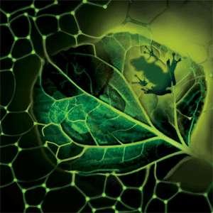 L'association inattendue d'une grenouille et de plantes a permis de créer une écume capable de photosynthèse artificielle. © Université de Cincinnati
