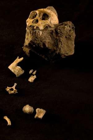 A l'aide de Google Earth, de nouveaux sites fossilifères ont pu être découvert, dont l'un qui renfermait le squelette vieux de 1,9 million d'années d'une nouvelle espèce d'hominidé : Australopithecus sediba. © Google