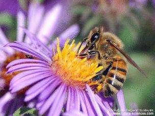Le retour du printemps va faire renaître la flamme entre abeilles et fleurs. © Futura-Sciences