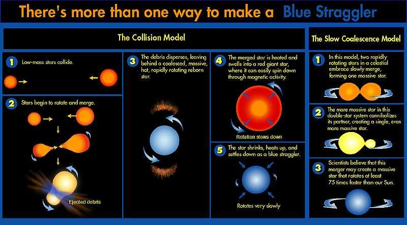 Schéma des deux théories expliquant la formation des traînardes bleues. A gauche la collision et à droite la fusion de binaire en contact. Des étoiles rouges vieilles donnent donc une seule étoile bleue ressemblant à une jeune étoile. Crédit : R. Saffer (Villanova University), D. Zurek (STScI), Nasa