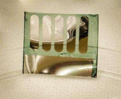 Le substrat sur lequel repose cette cellule photovoltaïque est fait de nanoparticules de cellulose produites à partir de végétaux. La température maximale requise durant la fabrication de cette cellule est de 80 °C, soit bien moins que les 3.000 °C qu'il faut atteindre pour obtenir le silicium à partir de la silice avant d'en faire des wafers. © Canek Fuentes-Hernandez, Georgia Institute of Technology