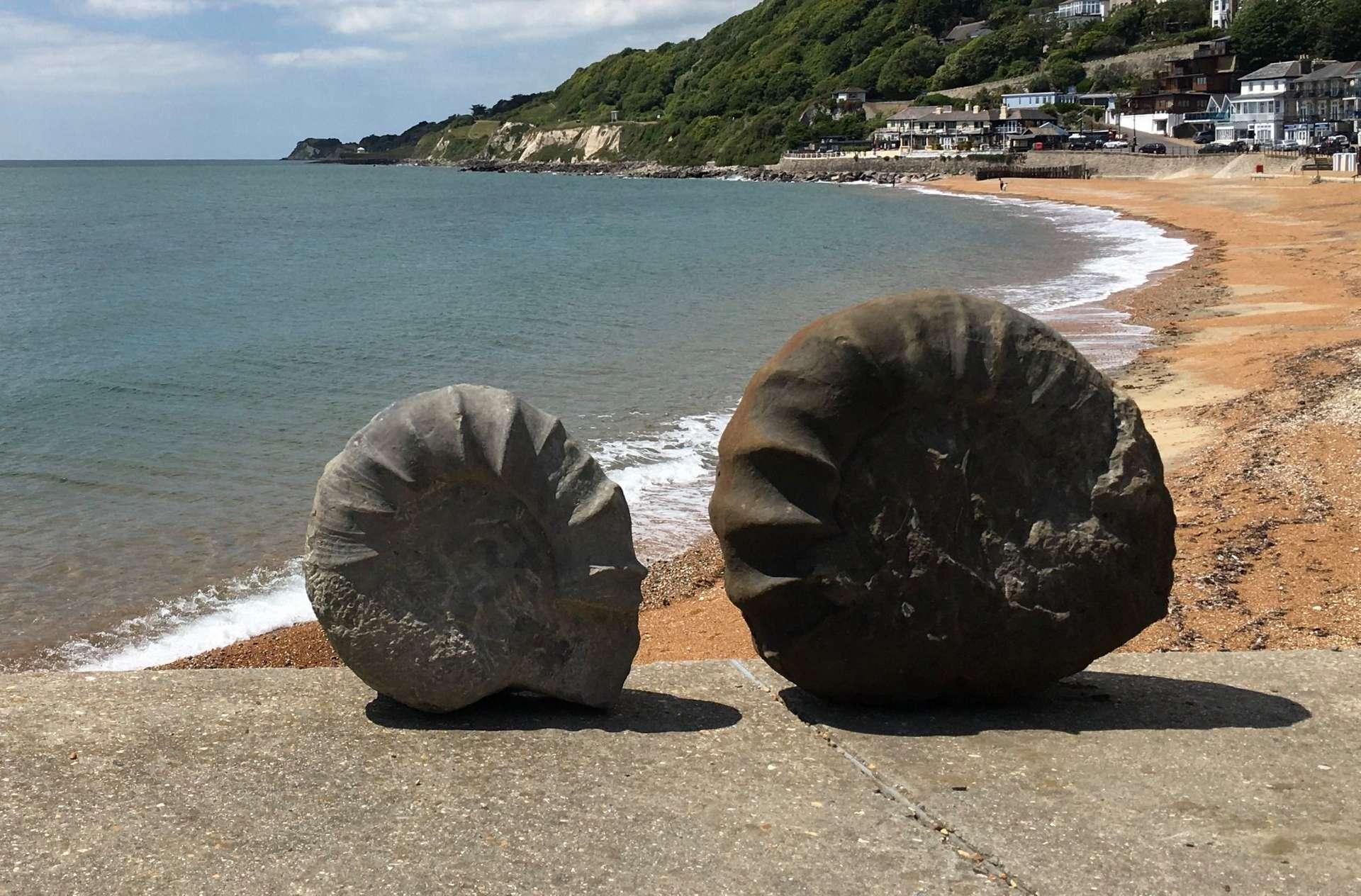 De nombreuses ammonites ont été découvertes sur l'île de Wight. © Wight Coast Fossils, Facebook