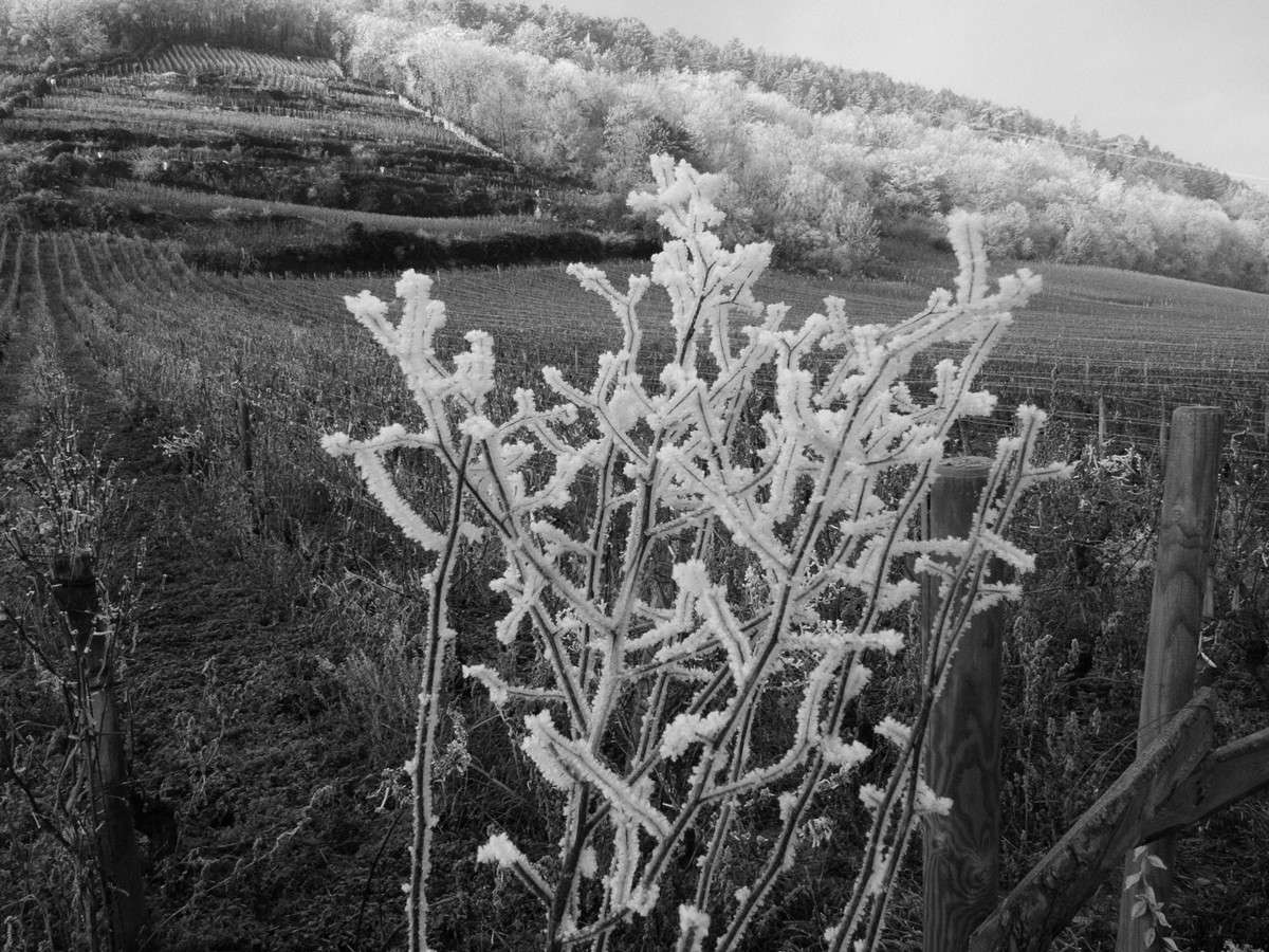 Ce vendredi 21 décembre, l'hiver débute dans l'hémisphère Nord. Couvrez-vous chaudement ! © Jean-Baptiste Feldmann