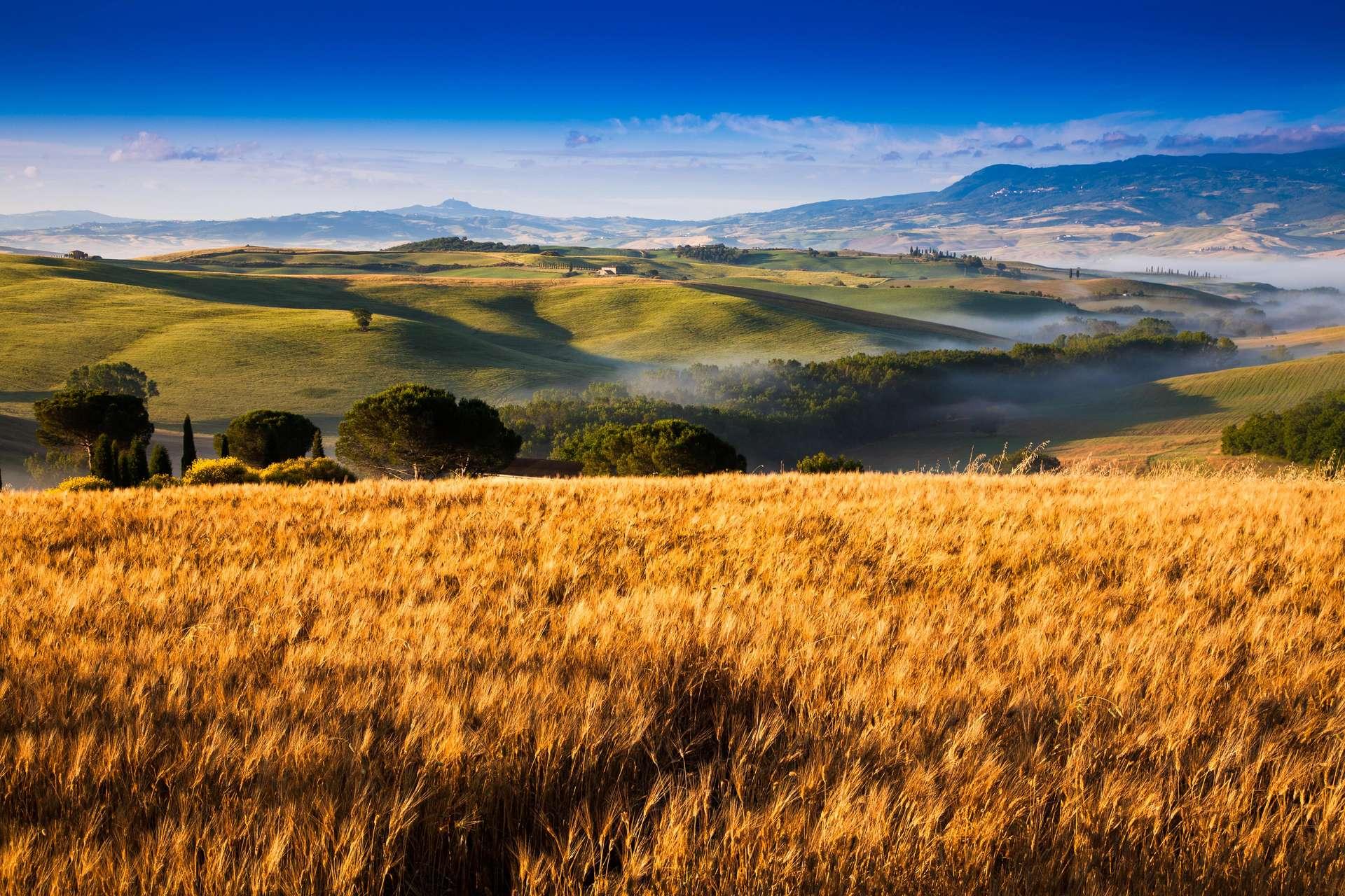 Le biochar, utilisé plus amplement, pourrait réduire de façon significative l'empreinte carbone de l'agriculture. © fotoinfot, Adobe Stock