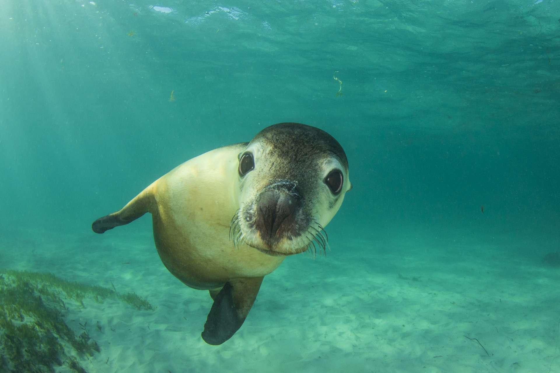 « Bonjour humanité ! Seras-tu capable de restaurer la vie des mers et des océans en une trentaine d'années ? J'ai lu sur Futura que c'était possible... » © Richard Carey, Adobe Stock