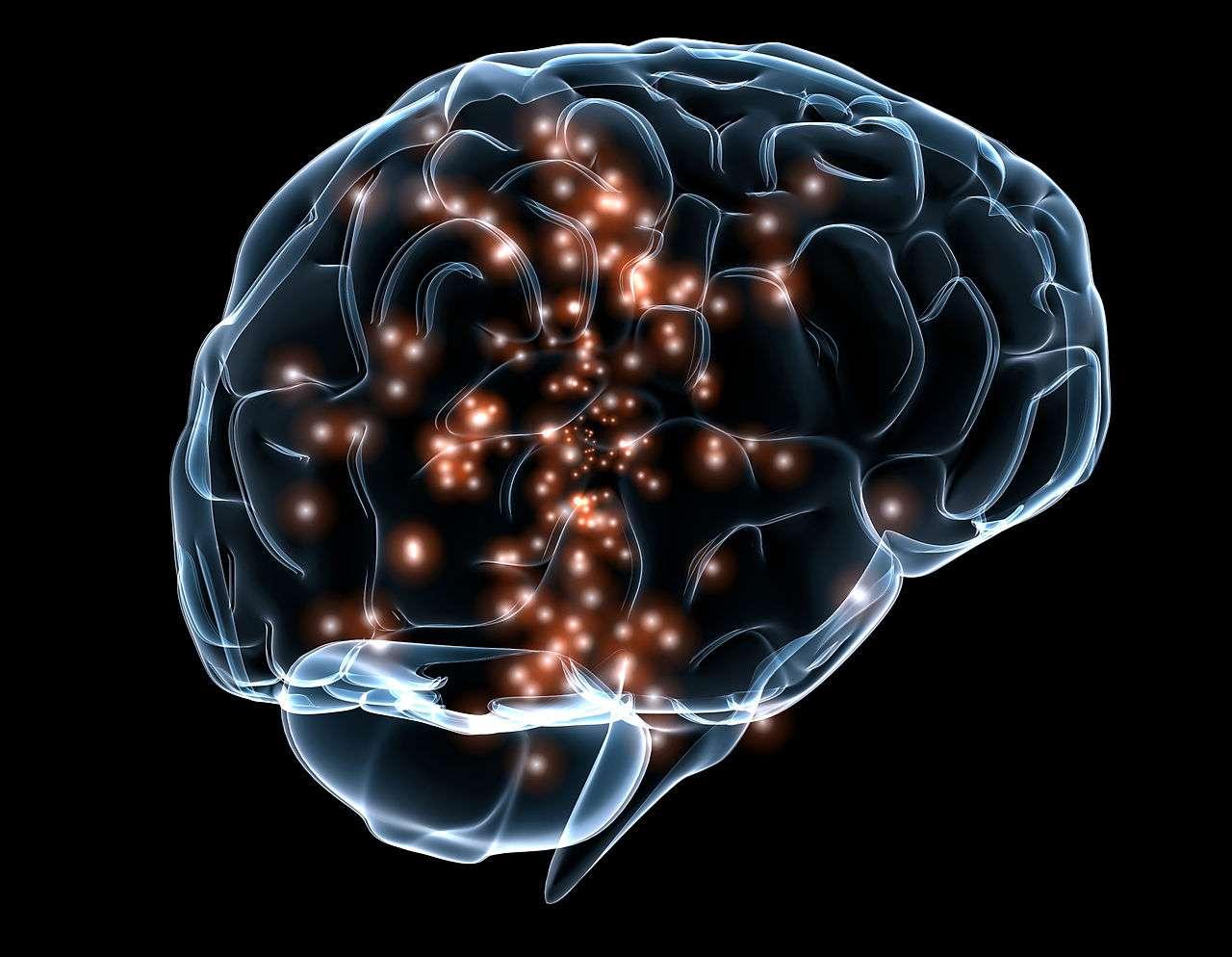 Une équipe de chercheurs du Centre de recherche basque sur la cognition, le cerveau et le langage (Espagne) et de l'université de Binghamton (États-Unis) a démontré que l'activité cérébrale associée à l'analyse d'un mot est spécifique à chaque individu. Ils ont alors créé un système d'identification qui sait reconnaître une personne grâce à la réponse de son cerveau aux mots qu'il reçoit. © Massachusetts General Hospital and Draper Labs, Wikimedia Commons