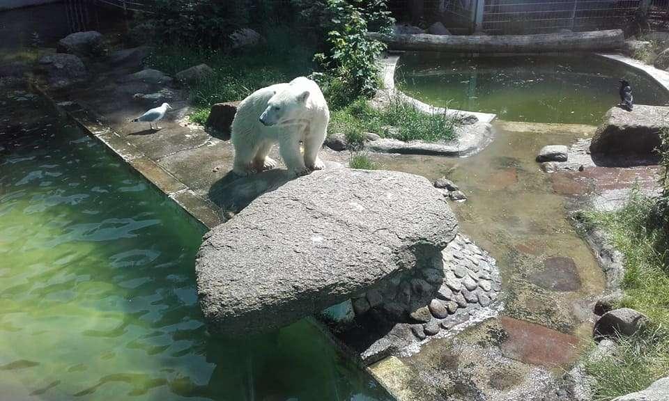En graves difficultés financières, le zoo de Neumünster songe à sacrifier certains animaux pour en nourrir d'autres. © Tierpark Neumünster, Facebook