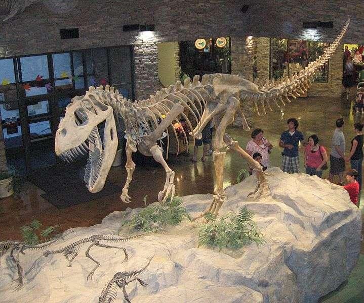 Le Torvosaurus est un dinosaure voisin du Tyrannosaurus rex. Il peut mesurer jusqu'à neuf mètres de long et vivait en Amérique du Nord et au Portugal. L'espèce s'est développée au Jurassique supérieur, soit voilà 150 millions d'années. © leon7, Wikipédia, GNU 1.2