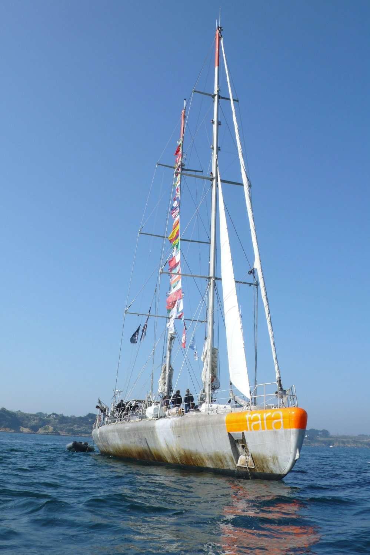 La goélette Tara mesure 36 m de long pour 10 m de large. Elle peut embarquer 14 membres d'équipage, marins et scientifiques compris. Elle est revenue à Lorient en mars derniers après avoir passé plus de deux années et demie en mer, parcouru 115.000 km et visité 32 pays. Plus de 120 scientifiques se sont relayés à bord, notamment pour étudier les écosystèmes marins et le plancton en particulier. © Jean-Luc Goudet, Futura-Sciences