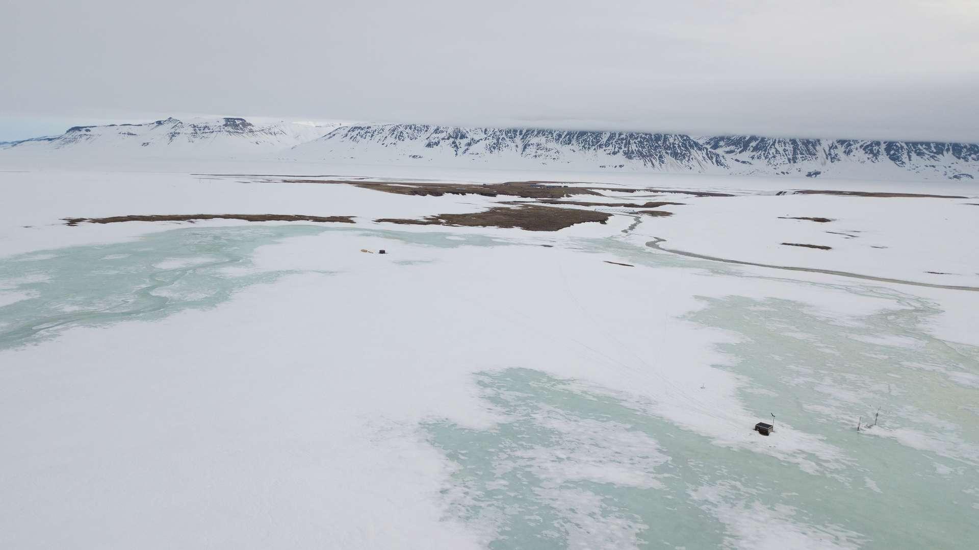 Une couverture neigeuse abondante a empêché la reproduction de la plupart de espèces de plantes et d'animaux. © Lars Holst Hansen