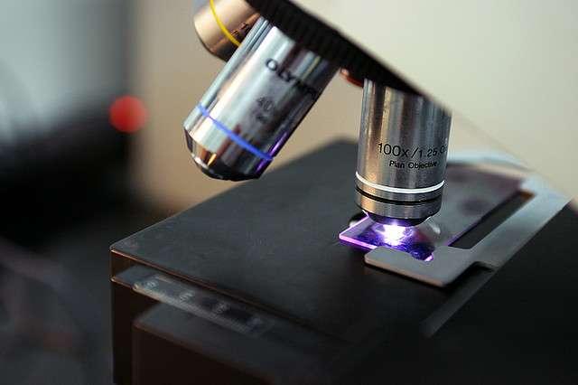 Les chercheurs de l'Institut Pasteur ont décrit la bactérie qui serait responsable des décès des trois nourrissons. © Long PHAM, flickr, cc by nc 2.0
