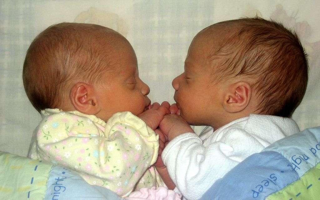 Les vrais jumeaux naissent dans un seul placenta : la maman vit donc une grossesse monochoriale. © 17Drew, Wikipédia, cc by sa 3.0
