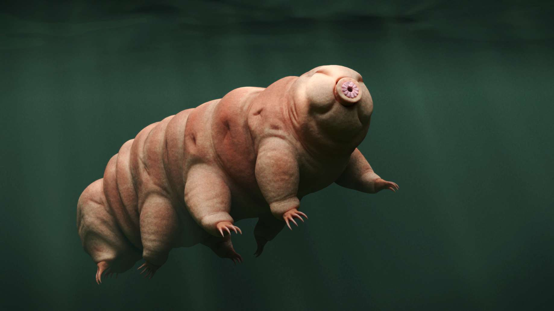 Des carcasses d'animaux microscopiques, en l'occurrence un tardigrade et des crustacés, ont été découvertes dans le lac Mercer sous la glace de l'Antarctique, où foisonne par ailleurs une vie bactérienne. © dottedyeti, Fotolia