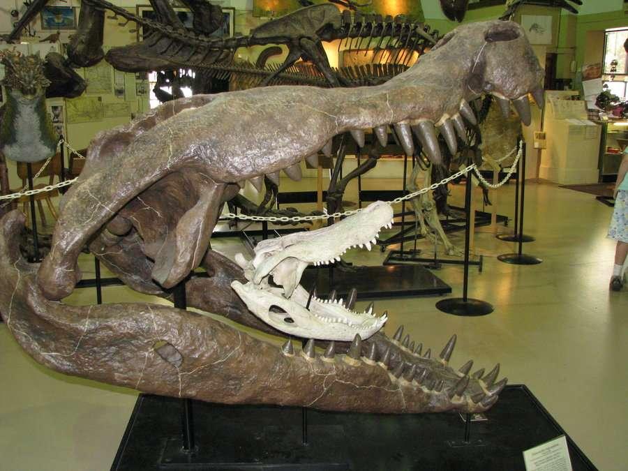 Un crâne d'alligator d'Amérique (Alligator mississippiensis) a été placé à l'intérieur de la mâchoire d'un Deinosuchus, un crocodyliforme qui a vécu voilà 75 millions d'années. © ShadowsStocks, cc by nc 3.0