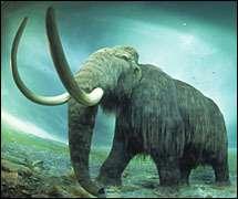 Le Mammouth laineux Musée de Colombie-BritanniqueCrédits : www.minerauxetfossiles.com