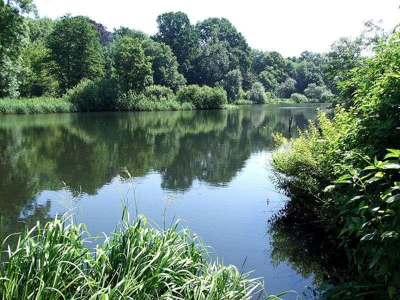 La ripisylve constitue un écotone entre l'écosystème forestier et l'écosystème aquatique. © Jantyp, Wikimédia CC by-sa 3.0