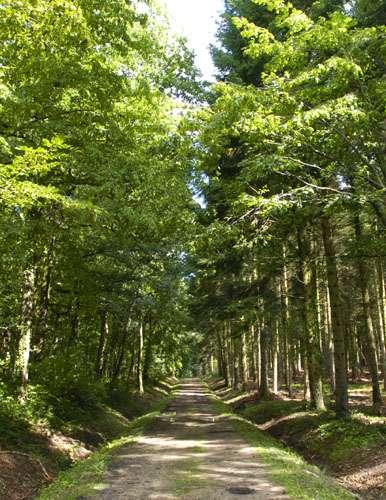 La forêt de la Comté. On sait que sa richesse (pour la faune et pour la flore) est grande. Mais encore faut-il la mesurer... © Conseil régional du Puy-de-Dôme