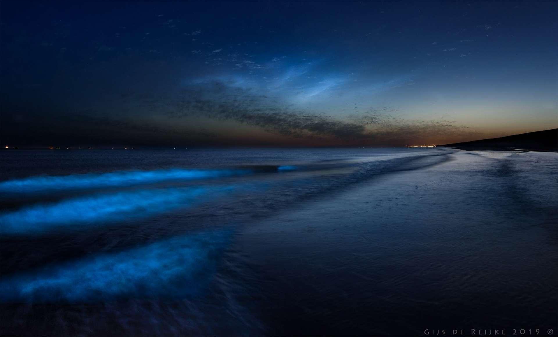 Noctiluca scintillans est une algue bioluminescente qui prolifère lorsque l'eau est calme et chaude. © Gijs de Reijke via @weermanreinier, Twitter