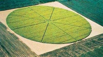 Etude de la dispersion du pollen du colza dans un champ circulaire de 105 m de diamètre à partir d'une parcelle centrale de colza transgénique résistant à la phosphinotricine de 9 m de diamètre.