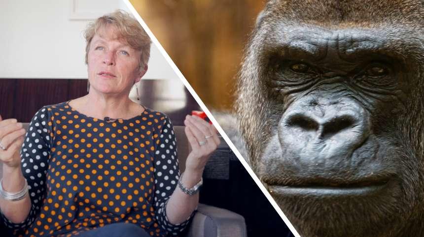 Interview : comment sauver les primates de l'extinction ?