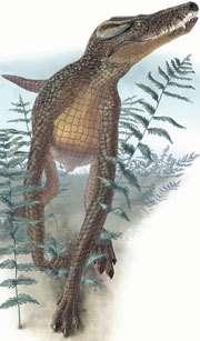 Junggarsuchus sloani, ancêtre terrestre des crocodiliens, avait déjà une tête de crocodile. Dessin réalisé par Portia Sloan pour le magazine National Geographic.