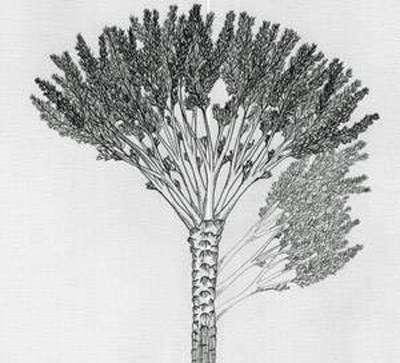 Wattieza fossile (reconstitution)