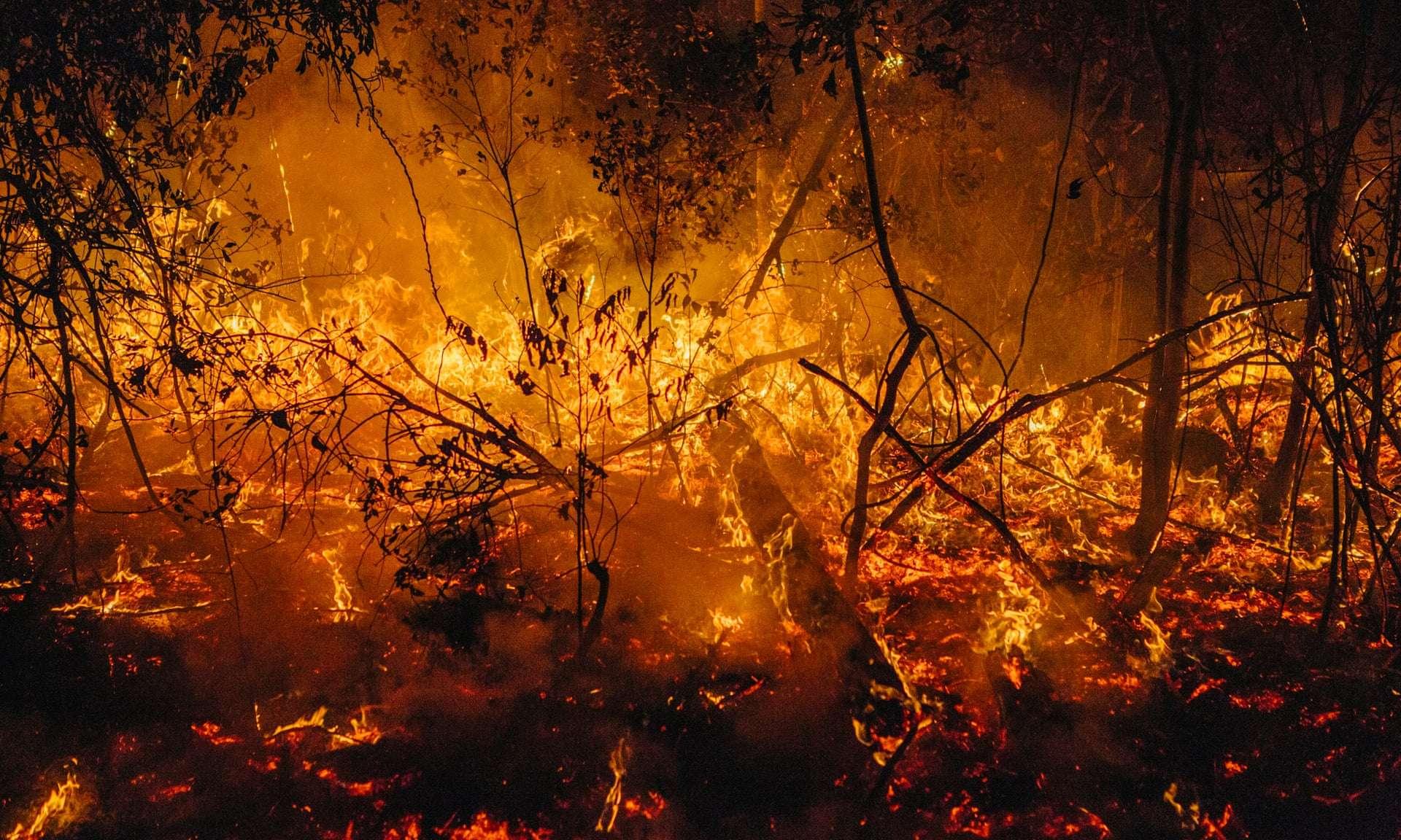 Les feux qui ravagent l'Australie depuis plusieurs mois sont les pires depuis 16 ans. © Cam Neville, The Guardian