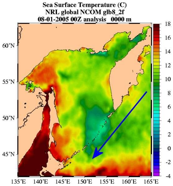 L'Oyashio matérialisé par les températures de surface des masses d'eau. © US Marine-Naval Research Laboratory, Global NLO Nowcast Forecast, domaine public