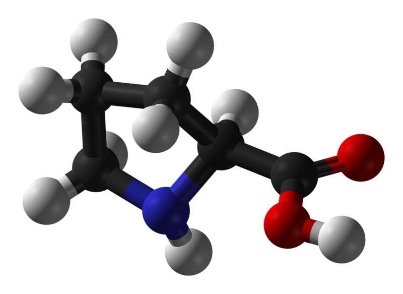 La proline possède une structure particulière. © Benjah-bmm27, Wikimedia, domaine public