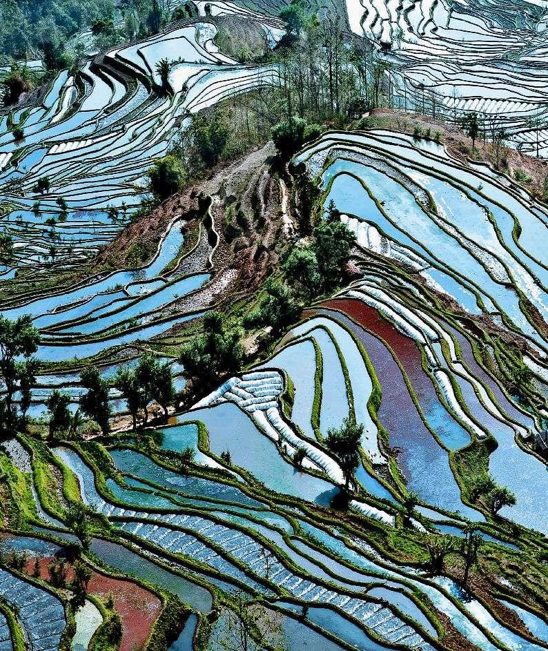 Les activités ont largement modifié l'aspect de la surface de la Terre. Un observateur extraterrestre ne manquerait pas de remarquer le caractère artificiel de ces rizières en cultures étagées. © i-stock/pengyou91