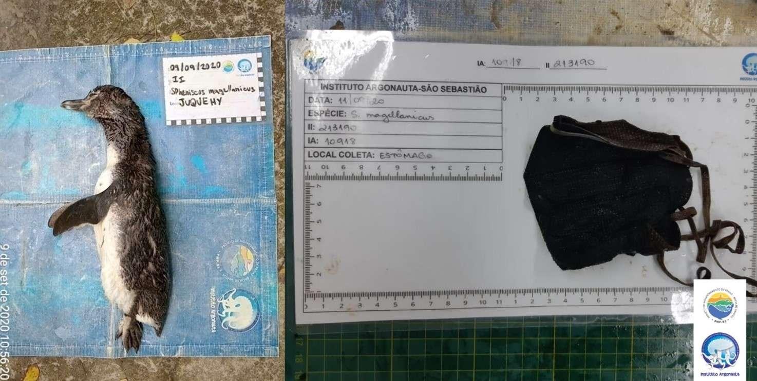 Un manchot retrouvé mort sur une plage après avoir avalé un masque