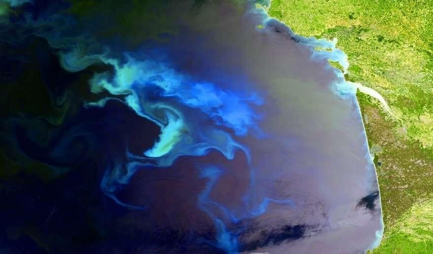 Un bloom phytoplanctonique dans le golfe de Gascogne photographié par le satellite Envisat. Une floraison phytoplanctonique est synonyme de bonne santé de l'océan. En effet, le phytoplancton est le premier maillon de la chaîne alimentaire. Une forte densité de plancton favorisera donc le développement des mollusques, poissons et mammifères marins. © Esa