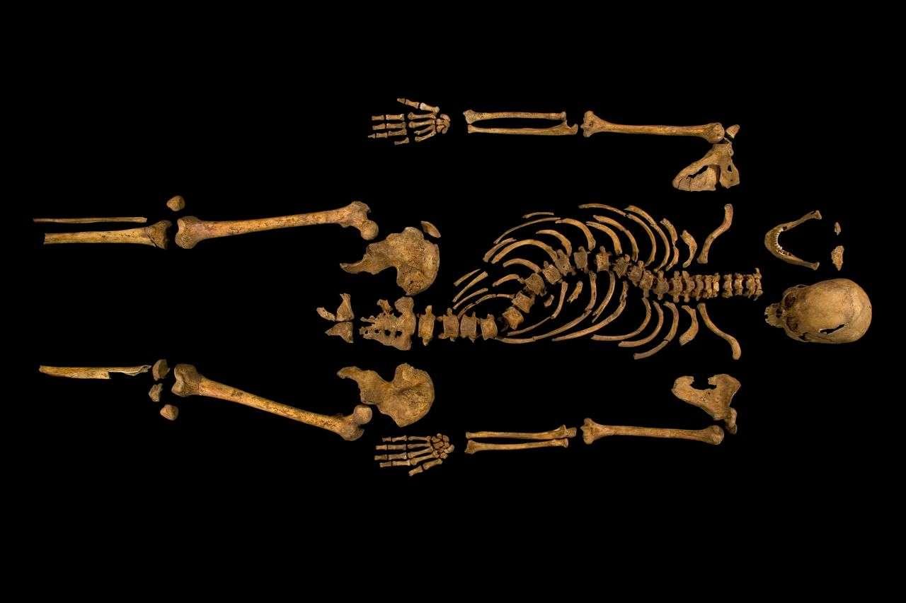 Examiné de près et daté au carbone 14, le squelette exhumé sous le parking de Leicester est bien, selon toute vraisemblance, celui du roi Richard III, réputé tyrannique et qui a inspiré à Shakespeare une pièce de théâtre devenue célèbre. © Université de Leicester
