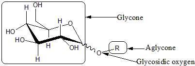 Structure d'un oside formé par la condensation d'un ose (glycone en anglais) et d'un alcool (R). Les deux molécules sont reliées par une liaison osidique (glycosidic oxygen) © Dineshts, Wikimedia domaine public