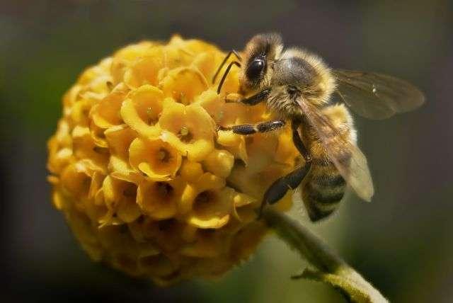 Plus que jamais, les abeilles constituent de véritables sentinelles écologiques puisqu'elles vont, en plus de leurs rôles habituels (comme la pollinisation), nous informer sur la qualité de notre air. © Pixage Photography, shutterstock.com