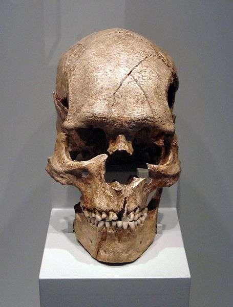 Un crâne d'Homo sapiens. © Dr. Günter Bechly CC by-sa