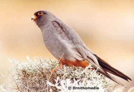 Avec la LPO, photographiez la biodiversité
