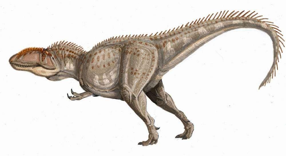 Le Giganotosaurus a dû être l'un des plus grands prédateurs de tous les temps, et a été placé dans la superfamille des carnosaures. © ДиБгд, Wikipédia, DP