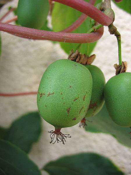Le kiwai ressemble au kiwi, mais est plus petit et plus sucré. © Warden/Licence Creative Commons