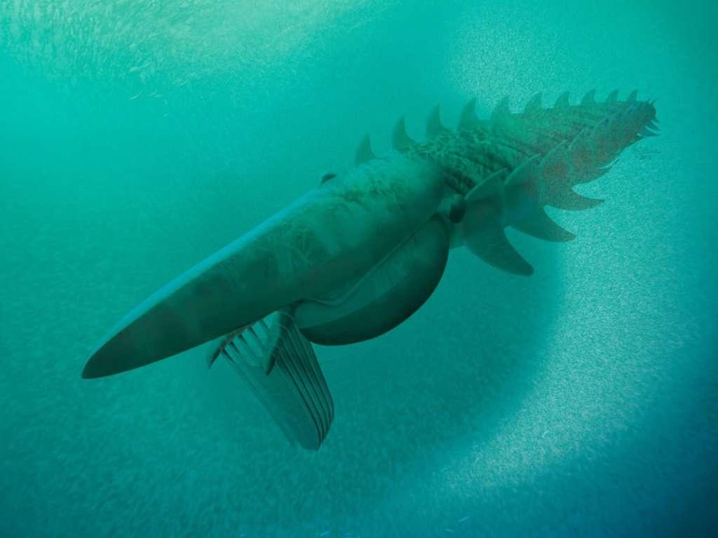 Aegirocassis benmoulae se nourrissait en filtrant l'eau de mer à la façon des baleines modernes capturant le krill avec leurs fanons. Ce mode d'alimentation a donc été adopté et découvert à plusieurs reprises par l'évolution depuis des centaines de millions d'années. © Marianne Collins, AP, SIPA