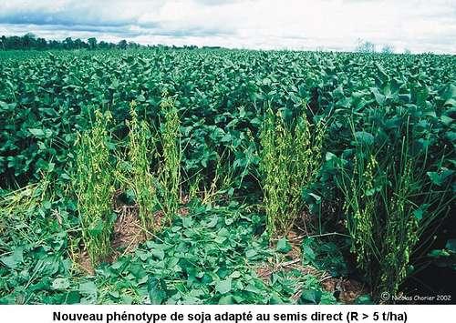 Plus des deux tiers des cultures de soja sur la planète sont génétiquement modifiées. Le soja non transgénique coûte désormais plus cher que le soja OGM. © eLaboureur, Flickr, DR