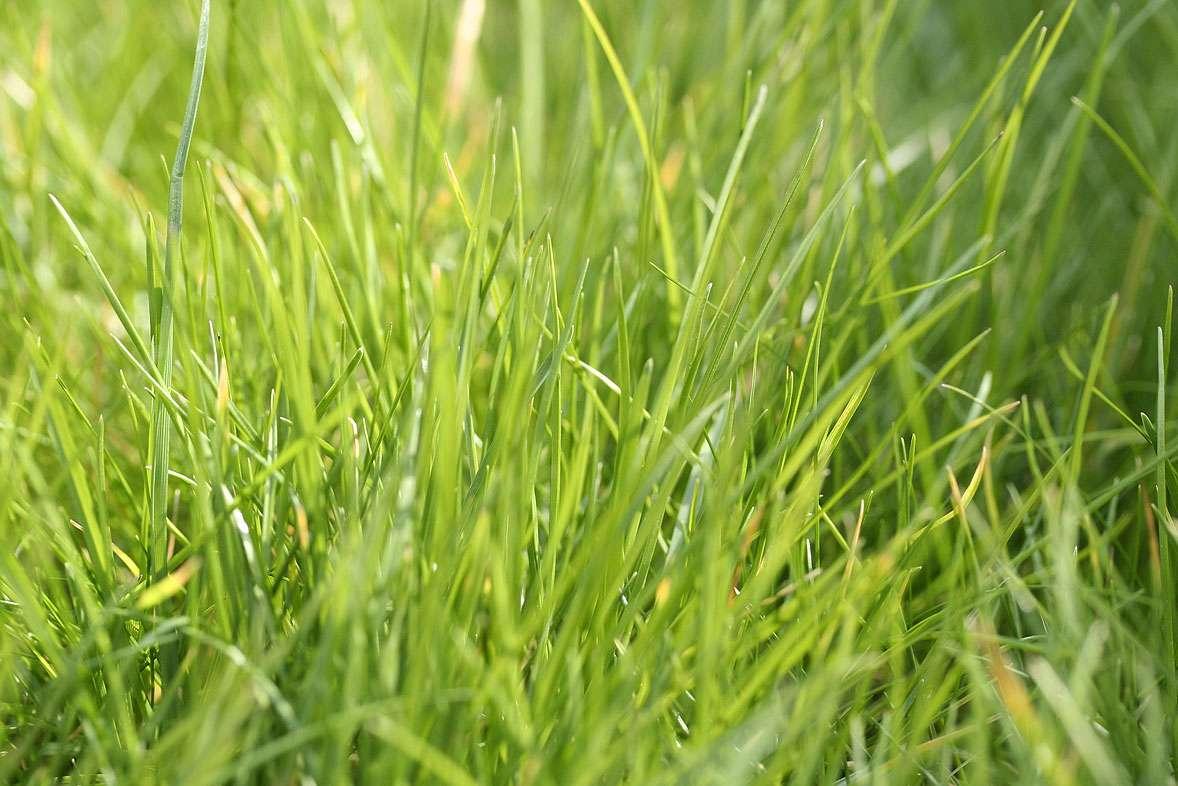 Pollen, attention à ne surtout pas tondre la pelouse - Source : Matt Batchelor - Fotolia.com