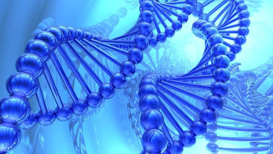 Les scientifiques continuent d'explorer l'ADN des cellules vivantes, notamment au niveau de l'épigénétique. © suravid, shutterstock.com