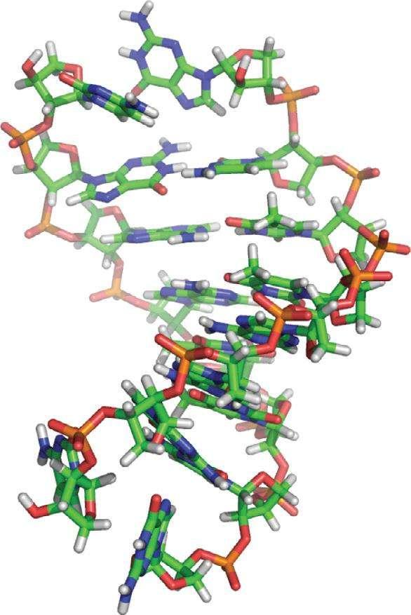 L'ATN a été découvert pour la première fois en 2000. Depuis cette époque, on considère qu'il figure parmi les précurseurs plausibles des molécules supportant l'information génétique dans nos cellules. Il faudra encore d'autres investigations pour préciser si oui ou non, il est l'ancêtre de l'ARN et de l'ADN. © Yu et al., Nature Chemistry