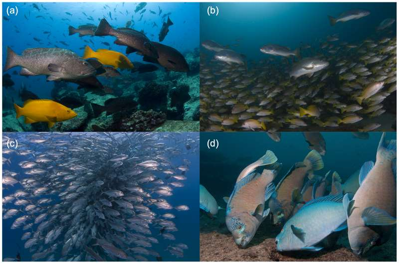 À Cabo Pulmo, les populations de poissons sont d'une diversité et d'une taille quasiment uniques. © Octavio Aburto Oropeza/Plos One
