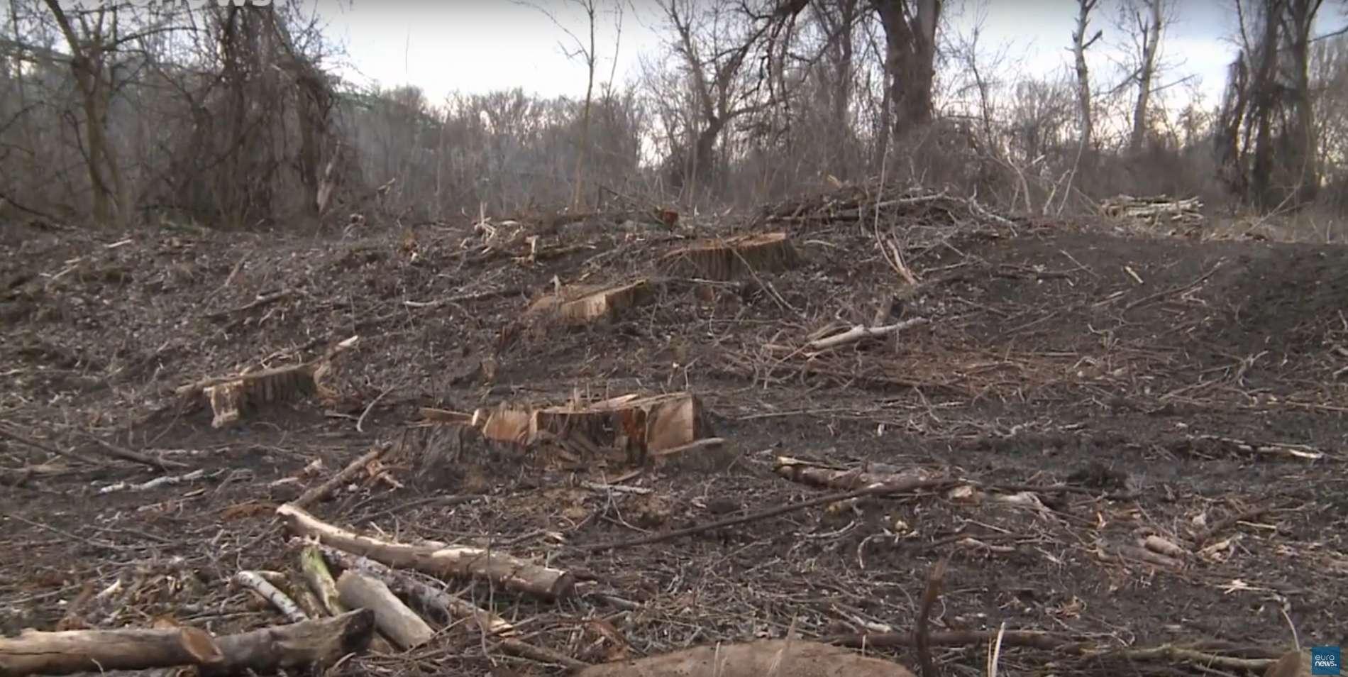 Une forêt centenaire a été rasée dans le cadre d'un programme européen de lutte contre les inondations. © Euronews, YouTube