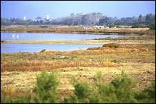Vue de la lagune de la réserve du marais d'Yves (Charente-Maritime)Photo : R.N. des marais d'Yves