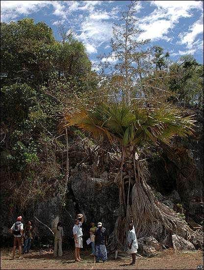 Un arbre géant, inconnu de la science... mais pas des populations locales. © Royal Botanic Garden